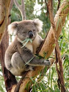 À la découverte de Phillip Island en Australie
