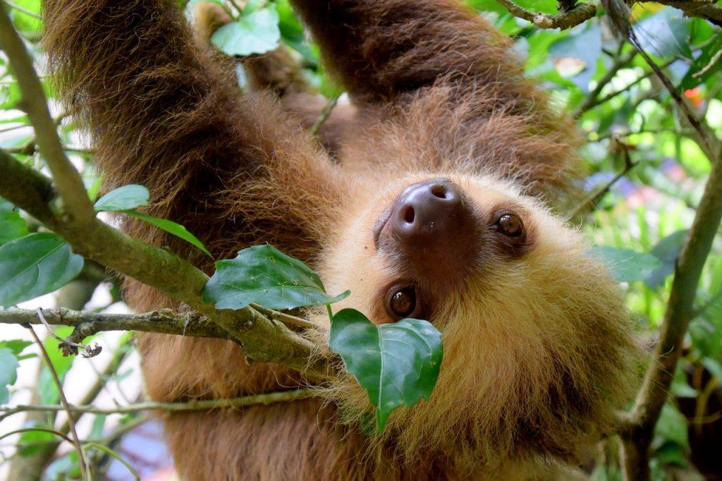 Costa Rica : remarquable par sa faune et sa flore
