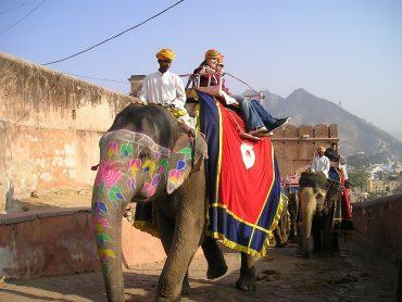 Eléphant en Inde : à rencontrer avec une agence locale en Inde