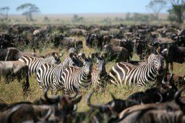 La Tanzanie, des paysages magnifiques